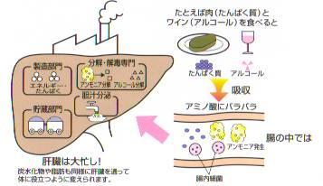 liver-ns03
